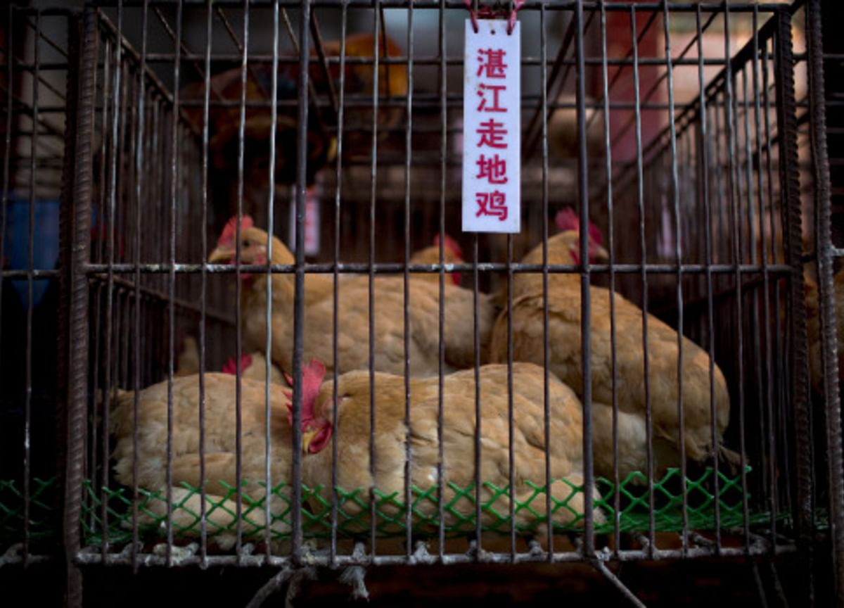 USDA to Allow Chinese Poultry Imports in Sign of Trade Progress