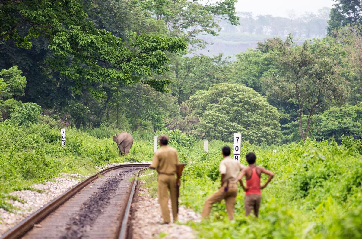 An elephant near a railway track in West Bengal. (Photo courtesy Aditya Panda)