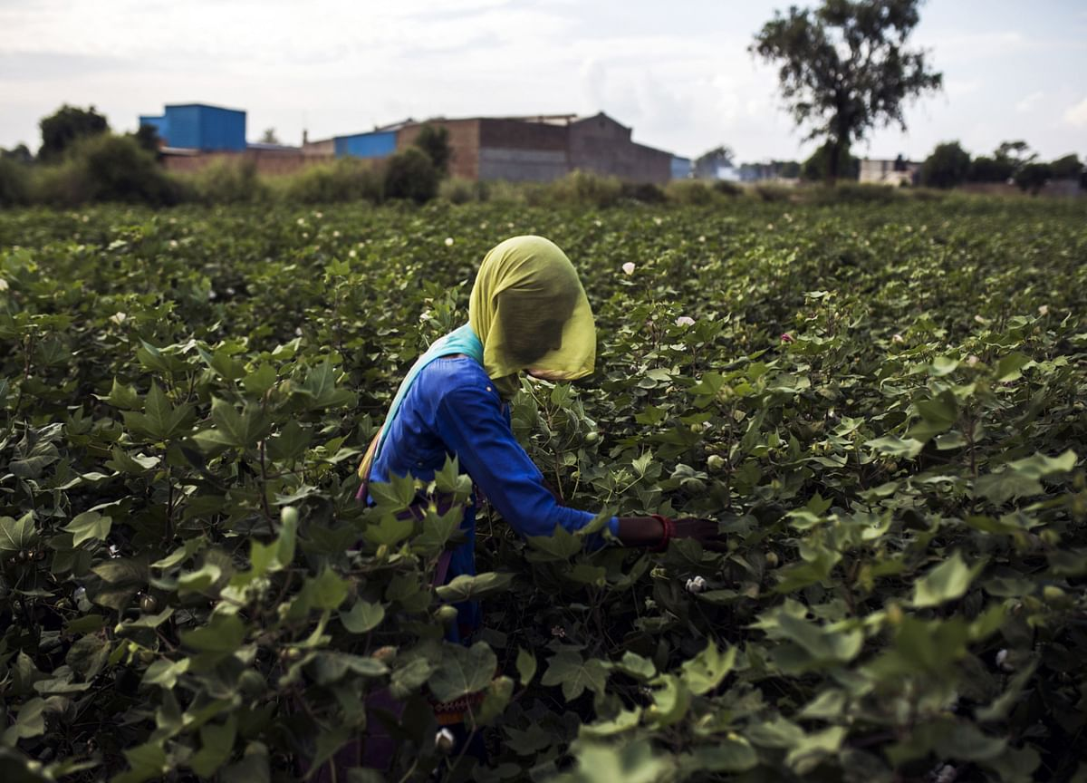Over Five Crore Farmers Yet To Get Third Installment Of PM-Kisan Scheme: Government Data