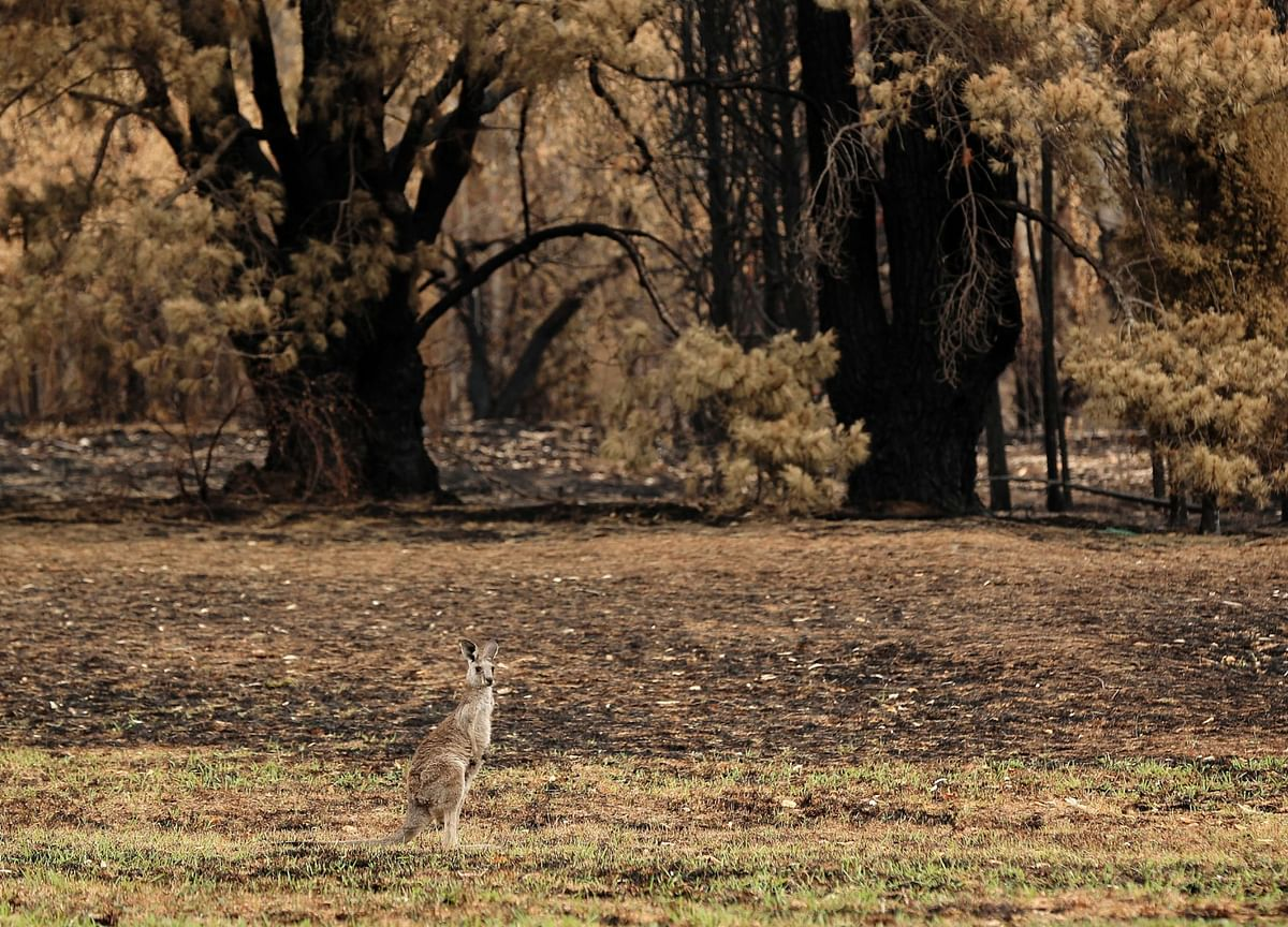 One Billion Animals Now Feared Dead in Australia's Wildfires
