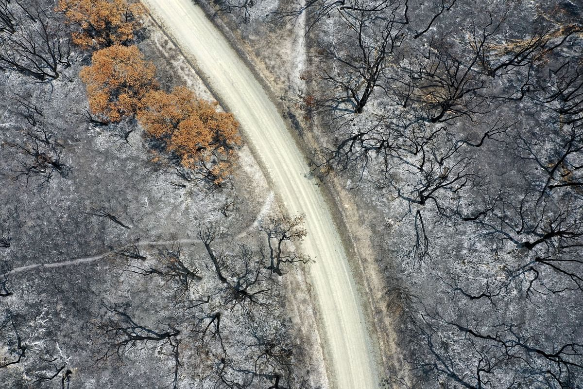 A track runs through trees scorched in wildfires in this aerial photograph taken near Buchan, East Gippsland, Australia, on Thursday, Jan. 9, 2020. (Photographer: Carla Gottgens/Bloomberg)