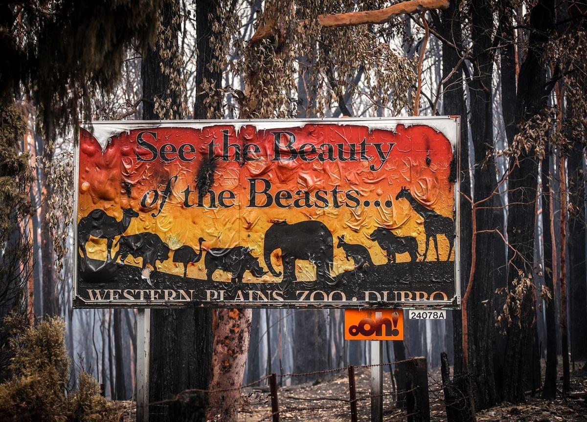 Half a Billion Animals Potentially Killed in Australia Wildfires