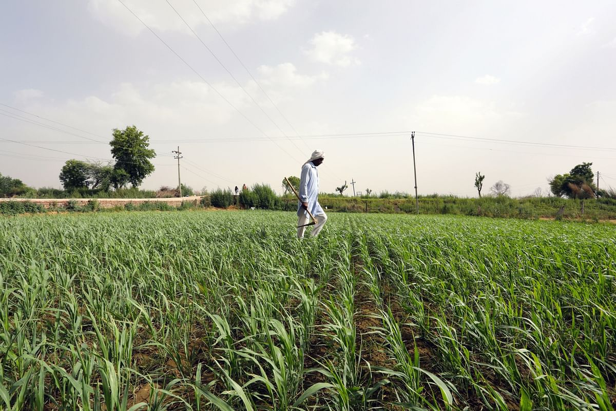 Economic Survey 2020: Need To Address Key Challenges In Farm Sector For Doubling Farmers' Income