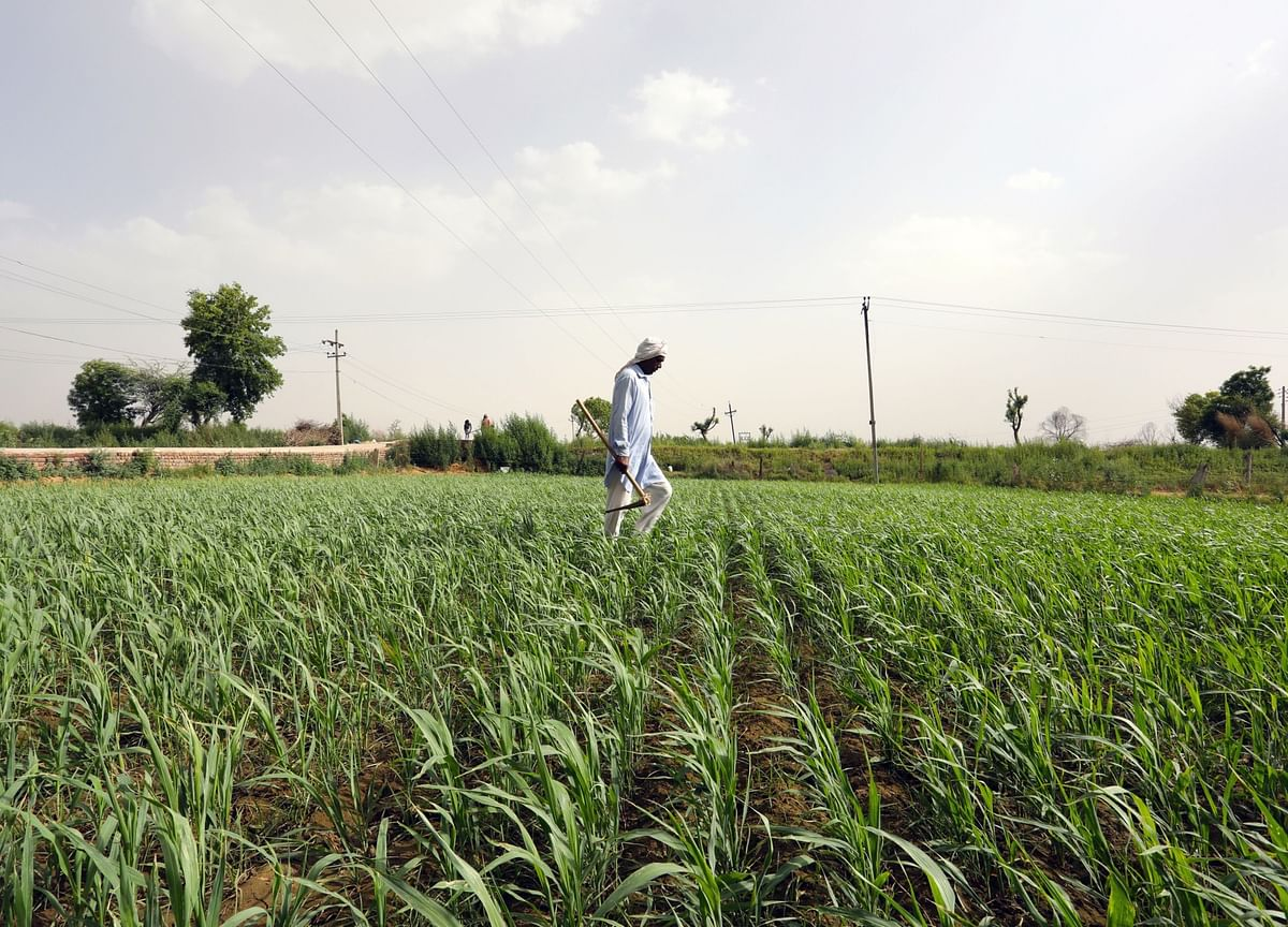 Agriculture Sector Update - Larger Companies To Continue To Gain Market Share: ICICI Securities