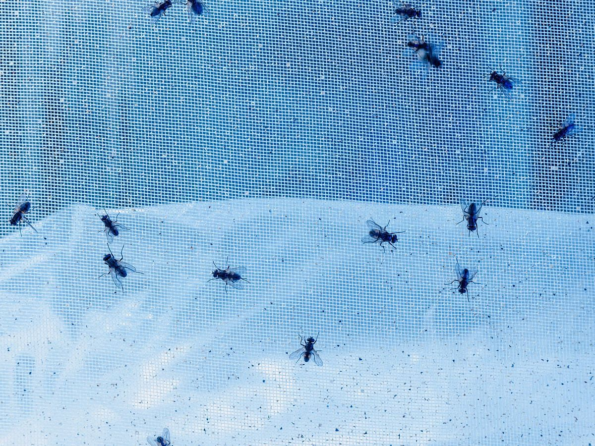 P&G Is Developing Its Next Big Thing In A Room Buzzing With Flies