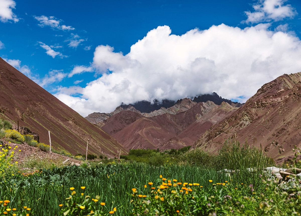 Foraging For Flavours In Ladakh