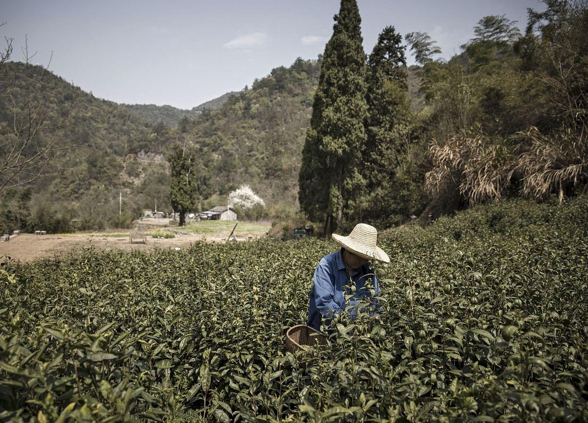 Virus Pushes China's Poor Rat Meat Farmers to Brink of Despair