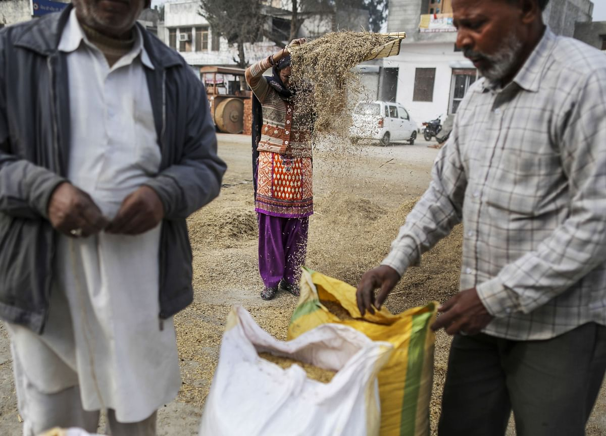 As Fears Over Rice Exports Grow, India May Continue Selling