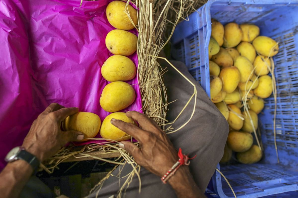A file image of Alphonso mangoes being packed into a wooden crate at a local mango trader's premises in Ratnagiri, Maharashtra. (Photographer: Dhiraj Singh/Bloomberg)