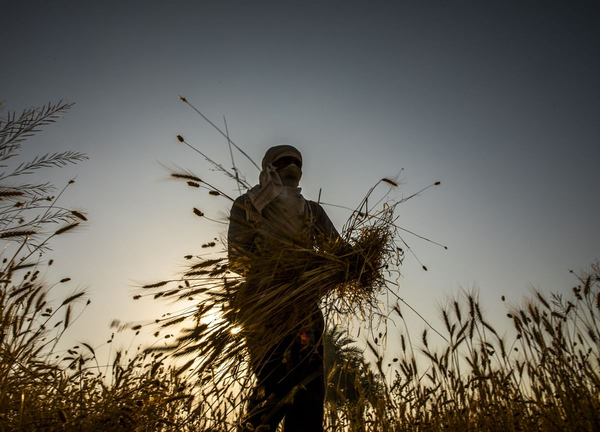 India Approves Ordinance To Allow Farmers To Freely Sell Produce