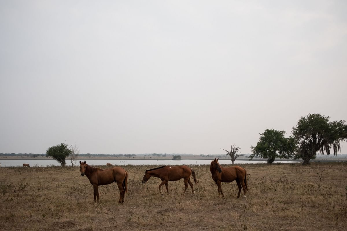 A Deadly Virus From Africa Is Killing Horses in Thailand