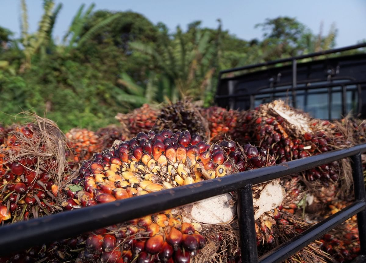 Palm Oil Set For Better Fortunes After Pandemic Wrecked Bull Run