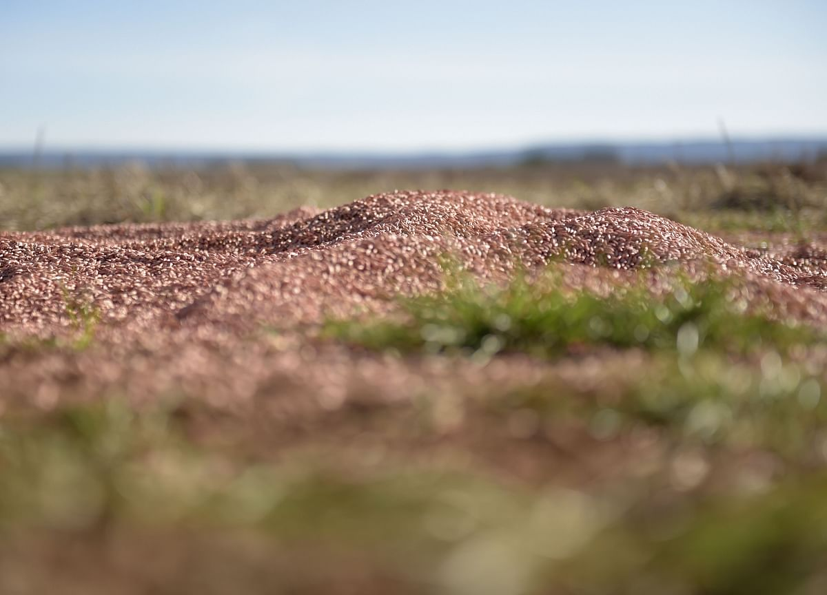 China Slaps Duties on Australian Barley as Tensions Escalate