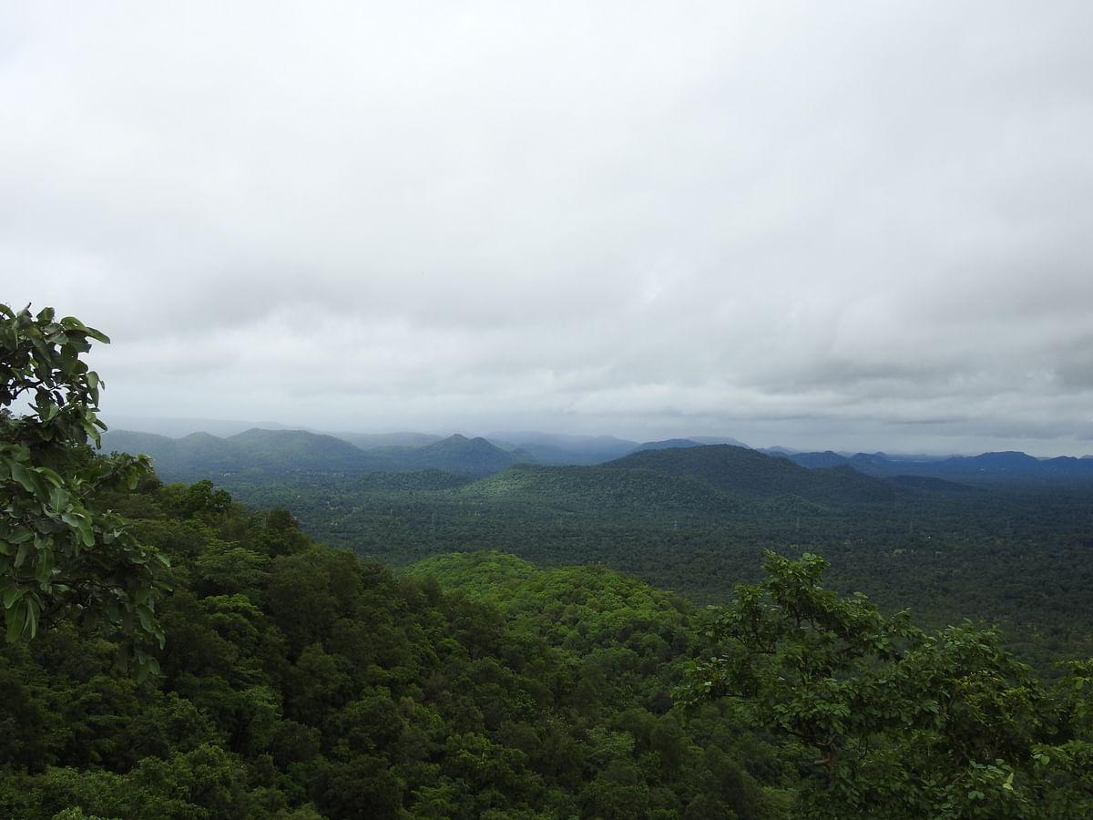 Forest landscape in Chattisgarh, a mineral rich area. (Photographer: Neha Sinha)