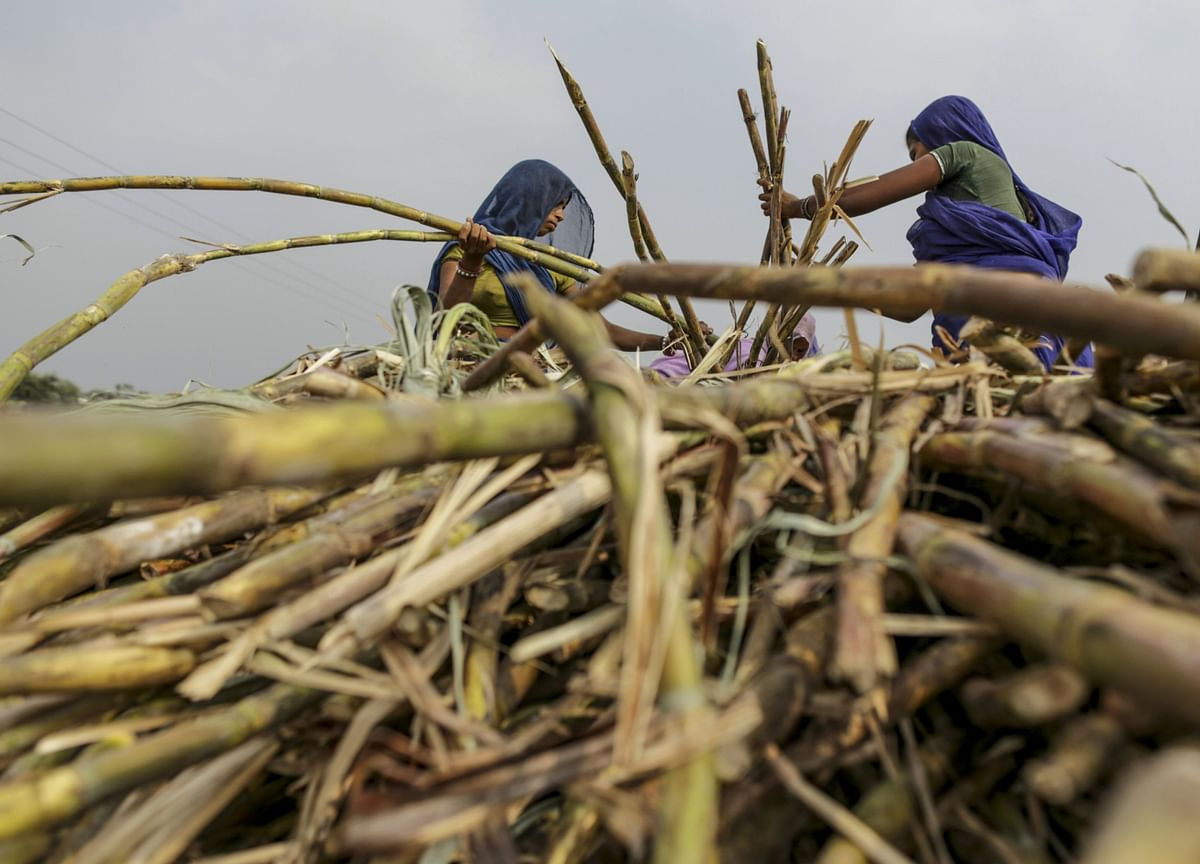 Cabinet Approves Increase In Sugarcane FRP By Rs 10  For 2020-21