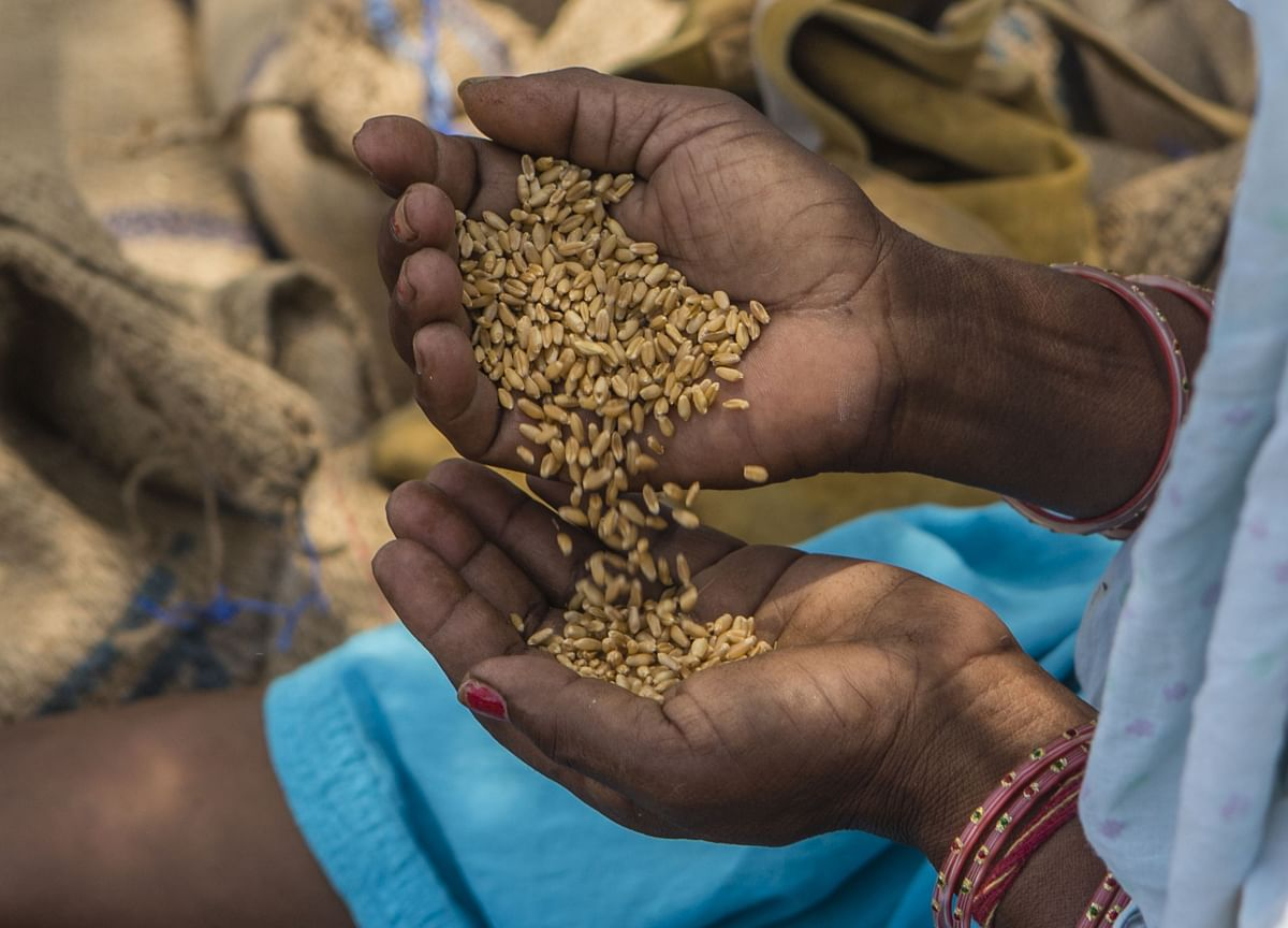 Government's Wheat Procurement Surpasses Last Year