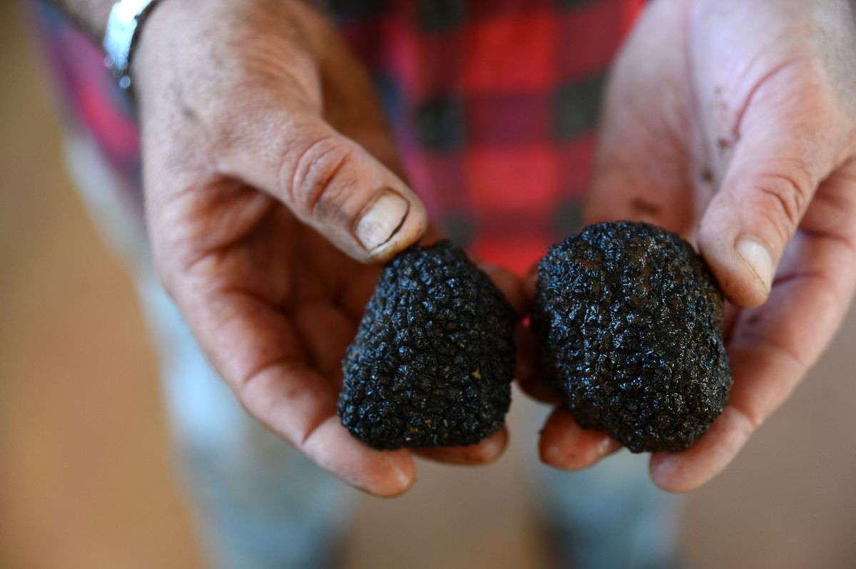 Unsold Truffles Tell Tale of Broken $3.4 Trillion Food Chain