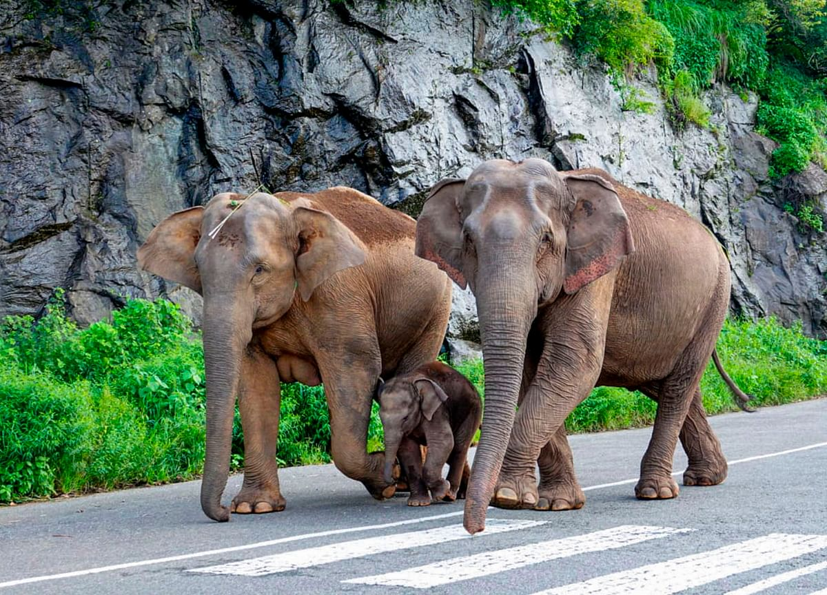 World Environment Day: Let's Not Stop At One Elephant