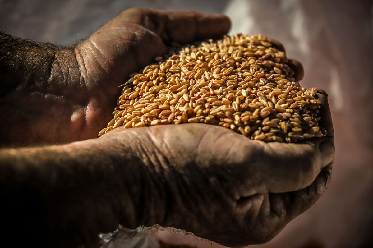 Kaveri Seed Q4 Review - Higher Than Expected Operating Loss On Higher Fixed Cost: Motilal Oswal