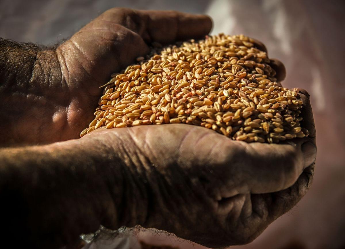 GMO-Seed Maker Says Sales Are Immune to India's Economic Slump