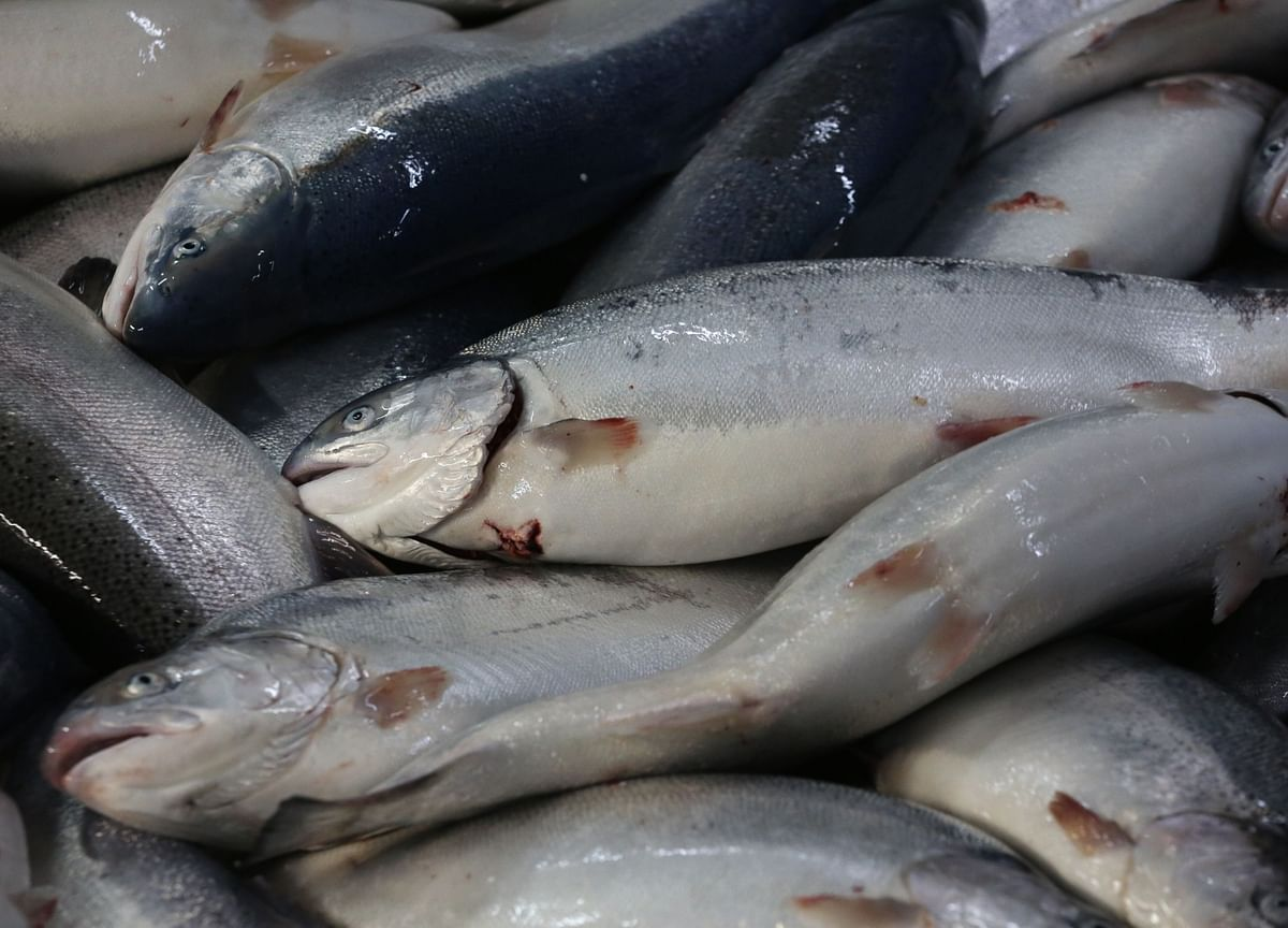 Salmon Farmers Hit by China Boycott After New Virus Outbreak