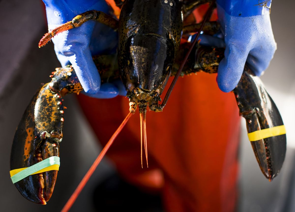 Trump Threatens New EU, China Tariffs Over Lobster in Maine Trip