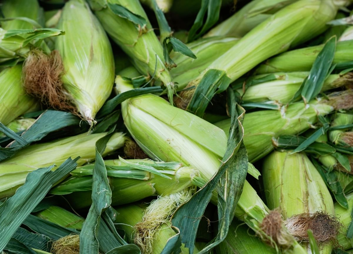 China Buys Most U.S. Corn Since 1994, Edging Toward WTO Quotas