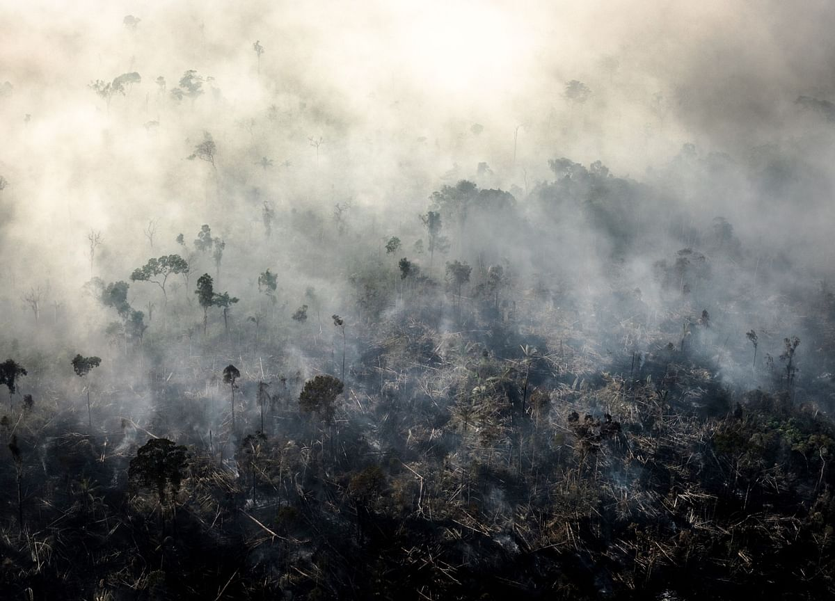 Can Investors Woo Bolsonaroto Save the Amazon?