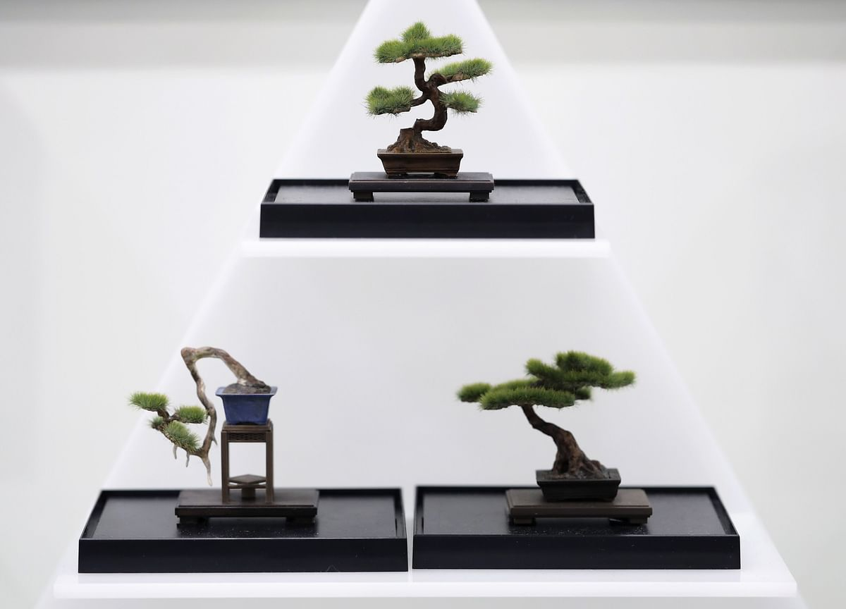 Forget Meditation Apps. I'm Binge-Watching These Bonsai Videos