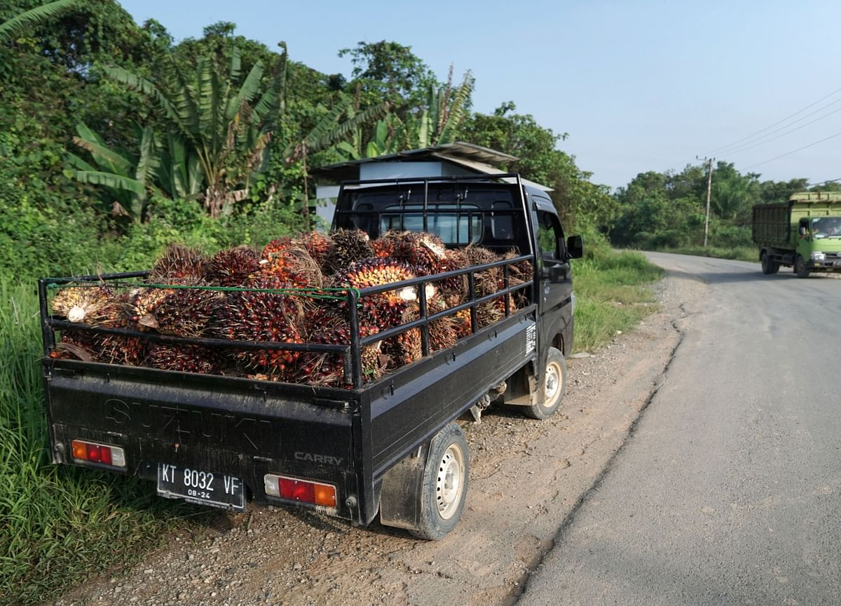 Palm Oil Imports by Biggest Buyer Expected to Hit 10-Month High