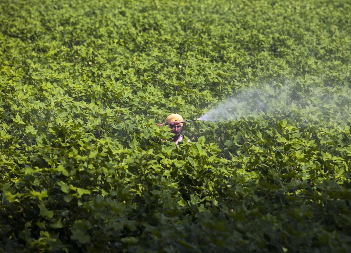 Sharda Cropchem Q4 Review - Revenues Driven By Strong Volume Growth: Dolat Capital