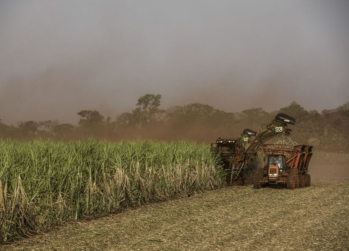 Indian Sugar Mills Look To Emulate Brazilian Peers In Switch To Ethanol