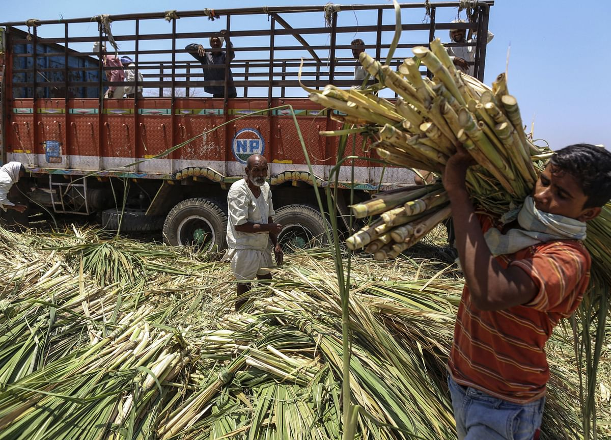 Maharashtra Sugar Factories Asked To Cut Down Output, Focus On Ethanol