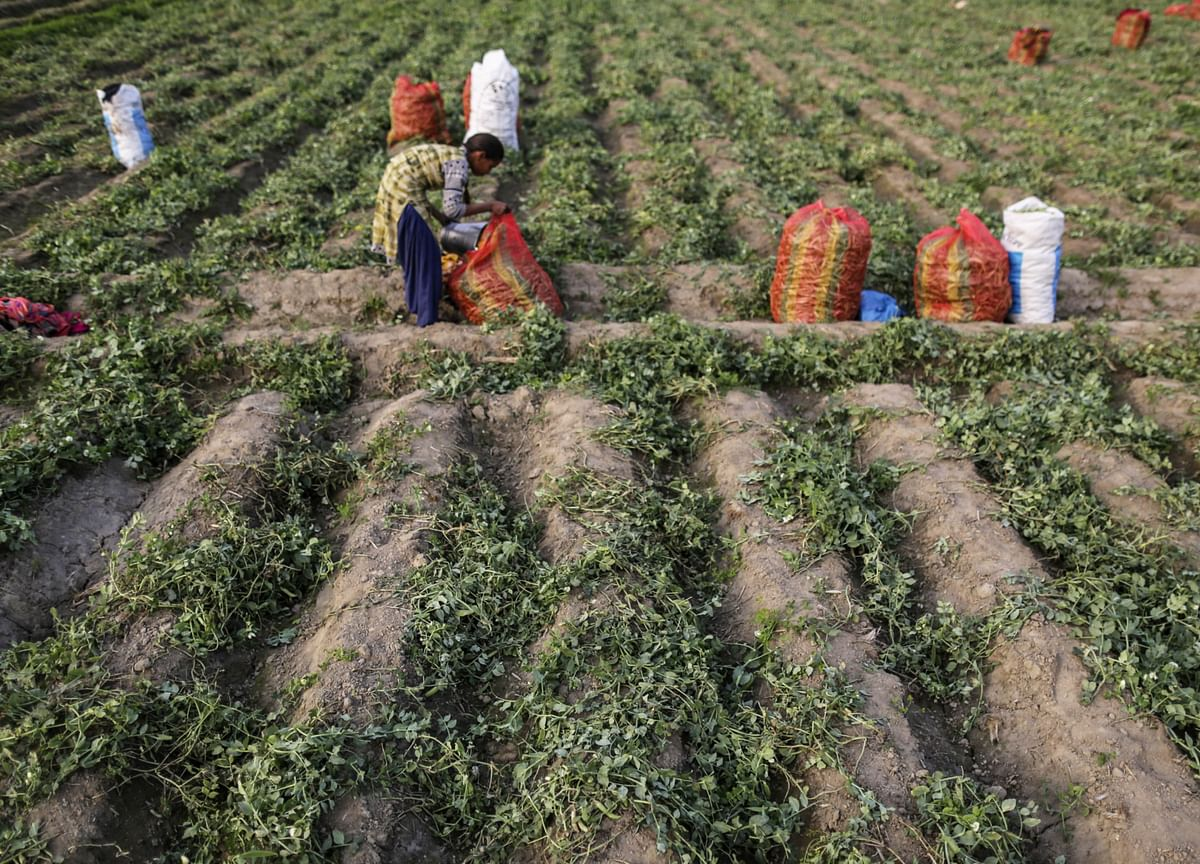 ICICI Securities: Better Price Discovery Of Agri Produce, More Investment In Rural India To Drive Incomes Of Farmers Upwards