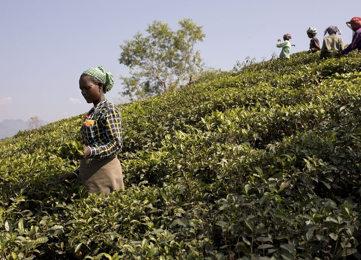 Why Tea Producers' Margins Will Remain Under Pressure