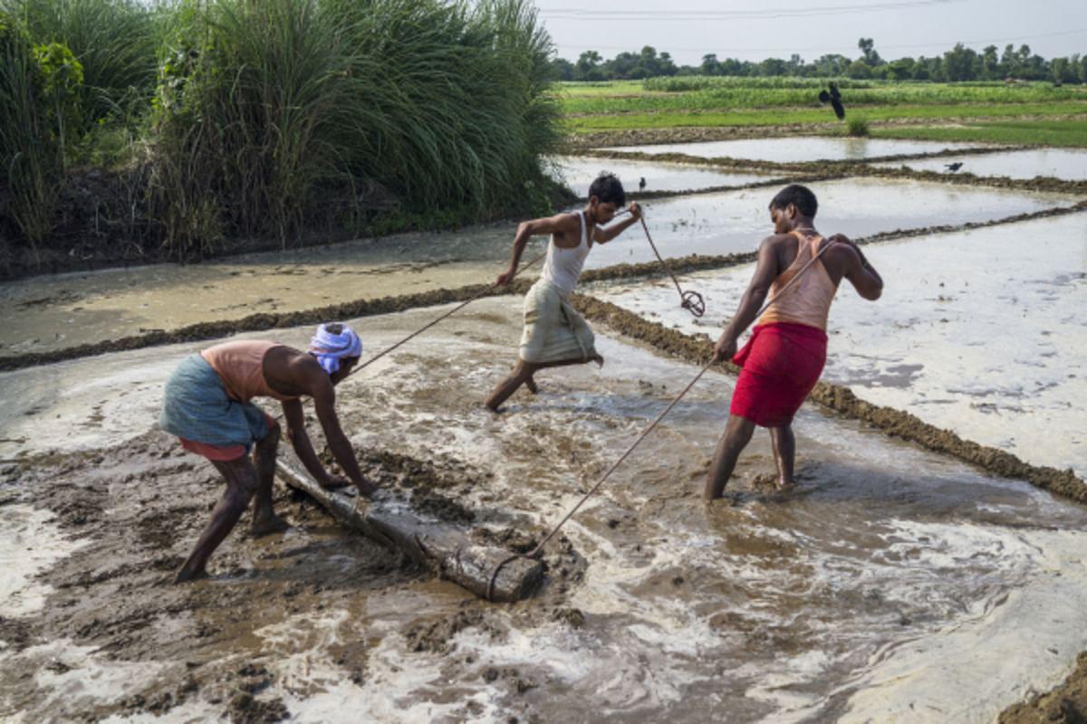 Farmers use a log to till a field in Raghopur, Bihar. (Photographer: Prashanth Vishwanathan/Bloomberg)