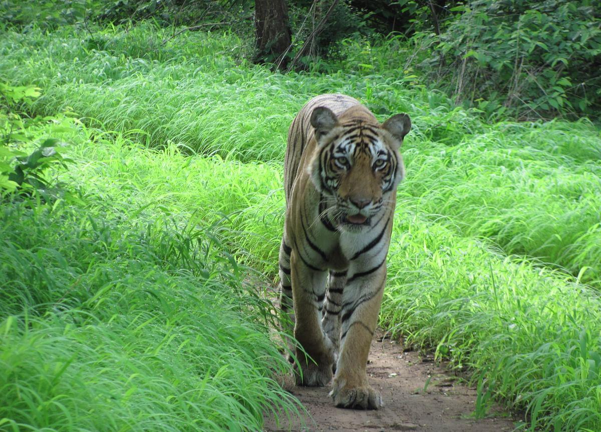 India's Wildlife Is Battling Disease Too