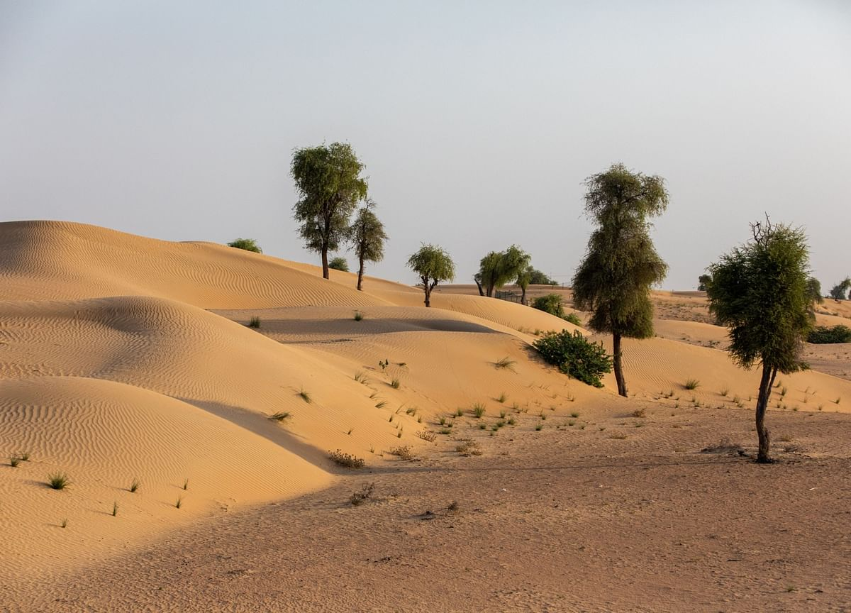 Abu Dhabi Looks to Desert and Space Farming to Boost Food Supply
