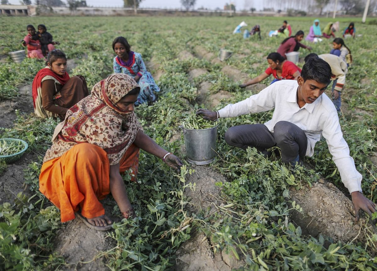 Bountiful Monsoon Rains Set to Boost India's Agriculture Growth