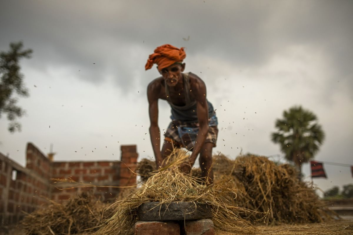 A farmer threshes wheat by hand on the terrace of his home at a village in Bihar, India. (Photographer: Prashanth Vishwanathan/Bloomberg)