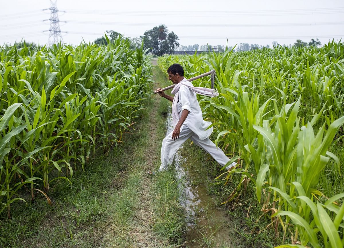 Virus-Ravaged India Bets on Poor Farmers to Rescue Economy