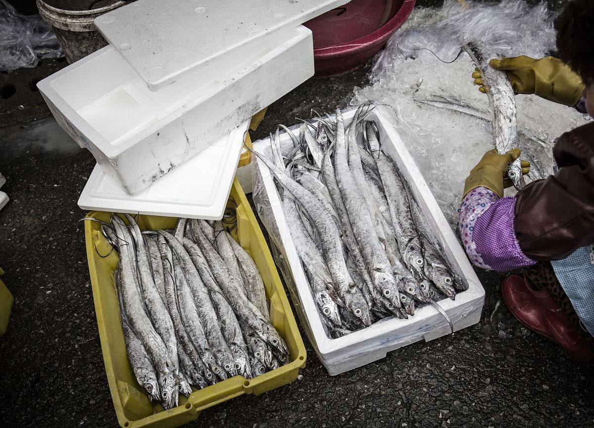 Frozen Fish Pileup in China Threatens Global Supply Chains
