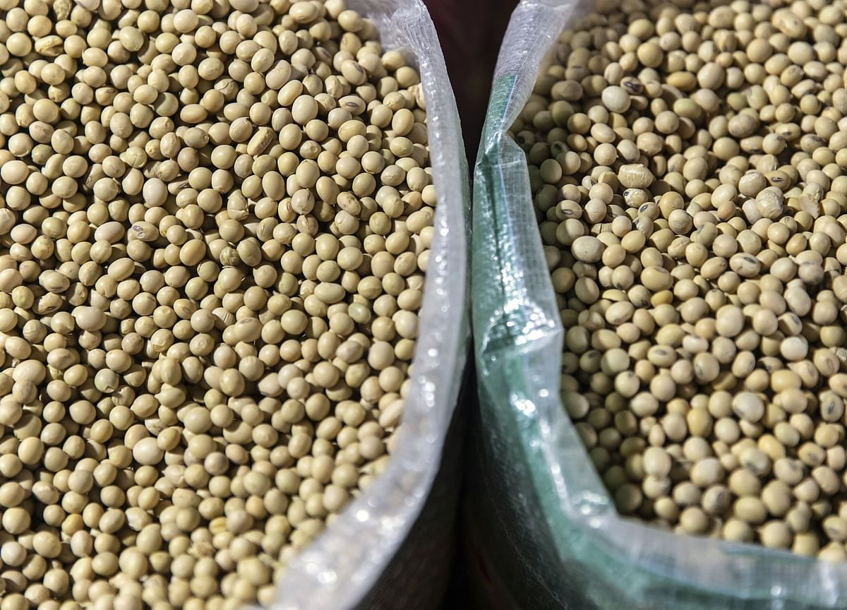 China Is So Thirsty for Soy That America Could Soon Be Importing