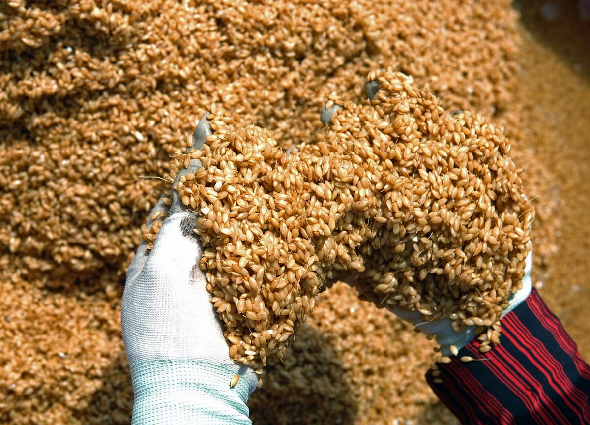 Kaveri Seed Sees Strong Growth In Non-Cotton Seed Portfolio In Q3: ICICI Securities