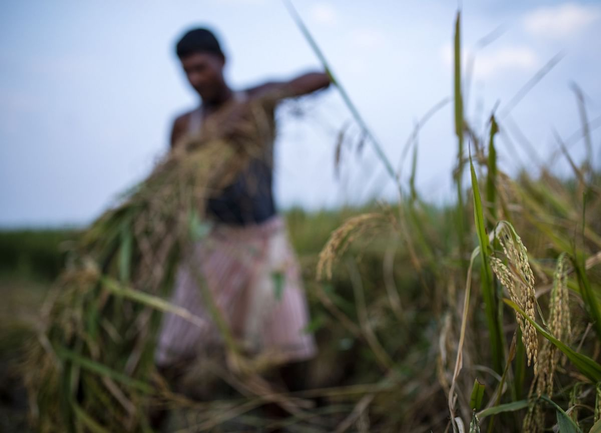 India to Boost Farm Credit and Infrastructure to Spur Output