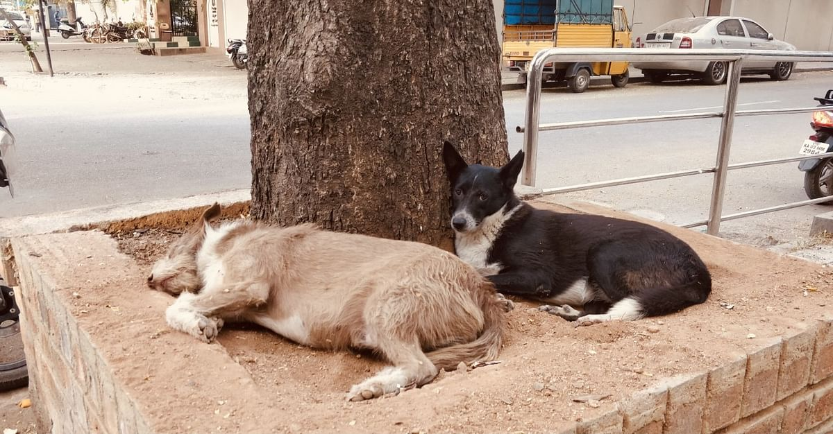 Dogs rest in the shade under a tree. (Photograph courtesy: Mia Bhat)