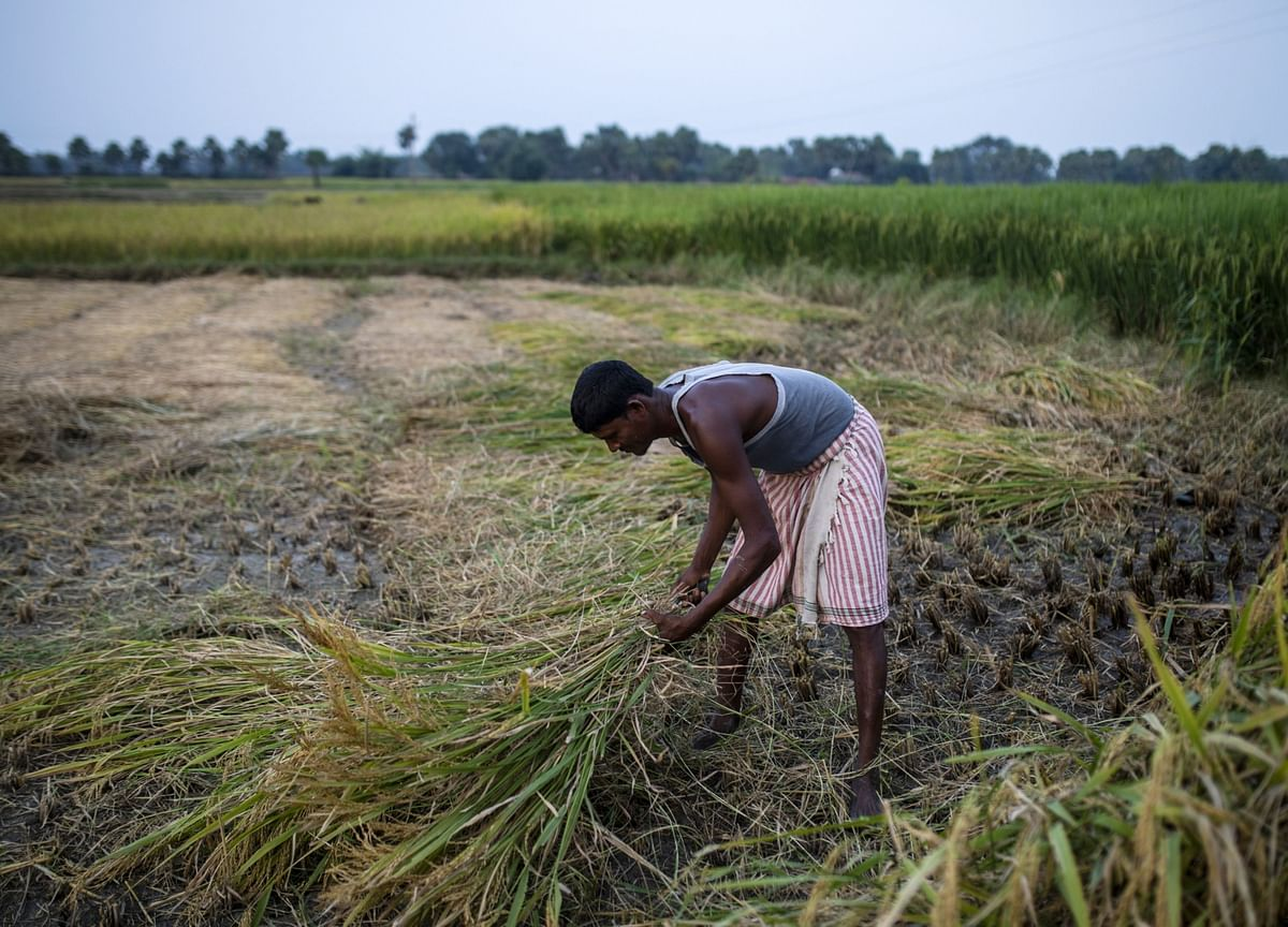 No Final Call Taken On Direct Cash Transfer Of Fertiliser Subsidy To Farmers: Government