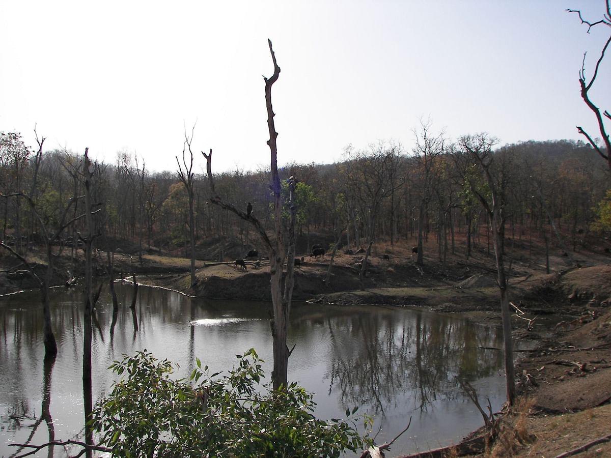 Dead trees in a waterhole in Pench Tiger Reserve, Seoni, Madhya Pradesh. (Photographer: Shalini Ghosh/Bloomberg)