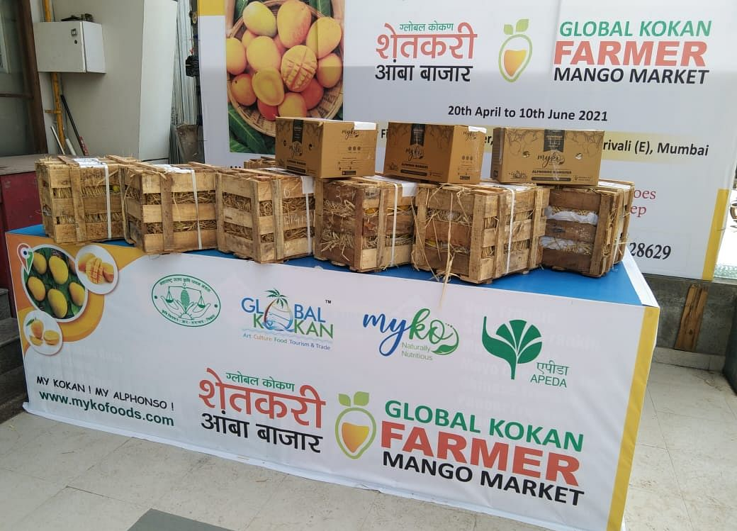 Farmers Are Bringing Mangoes Directly To Your Table