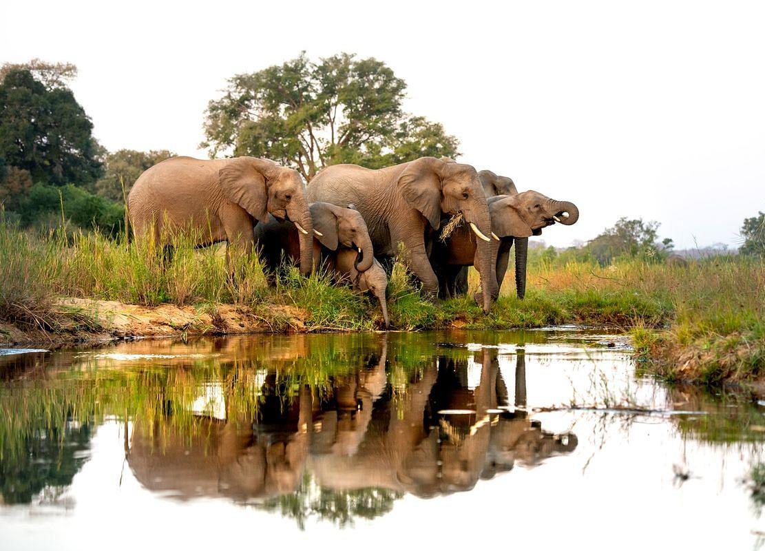 Elephant Hunts For $70,000 to Fund Zimbabwe National Parks